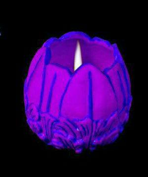 شمع لاله فانتزی شعله داخل