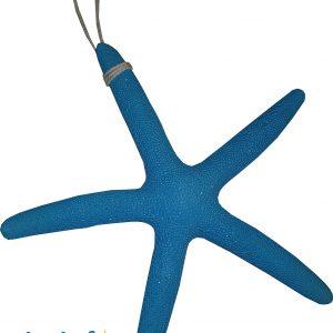 ستاره دریایی 5569
